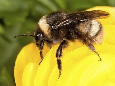 Пчела посадила самолет в Англии