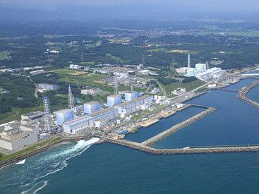 Уровень радиации в лесах вокруг Фукусимы снизился вдвое