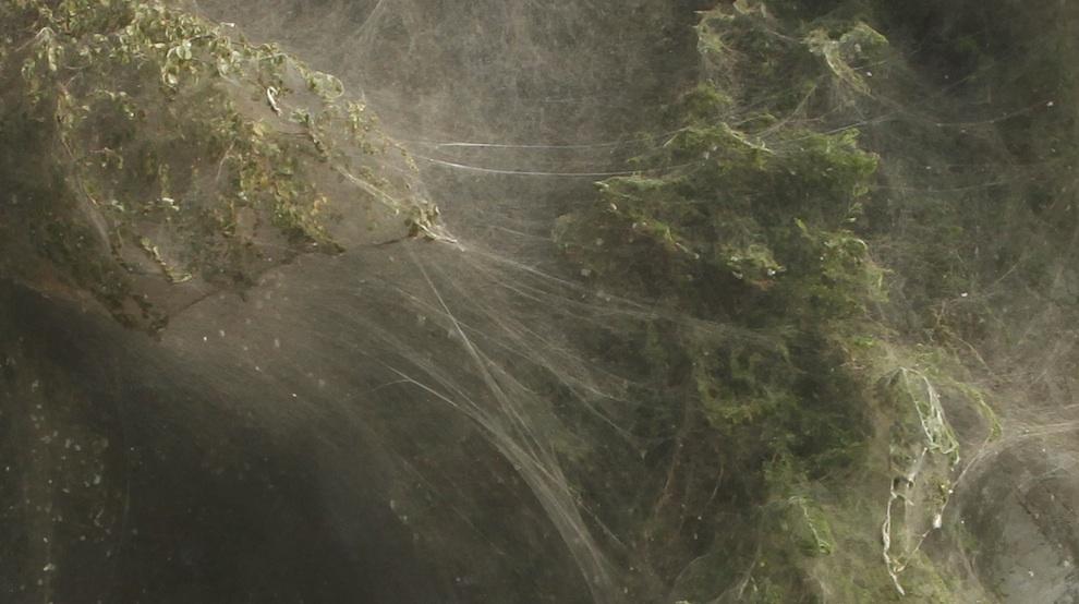 Массовое нашествие пауков в Пакистане - ФОТО