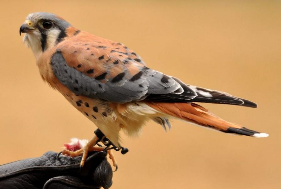 Топ-10 самых красивых птиц в мире - ФОТО