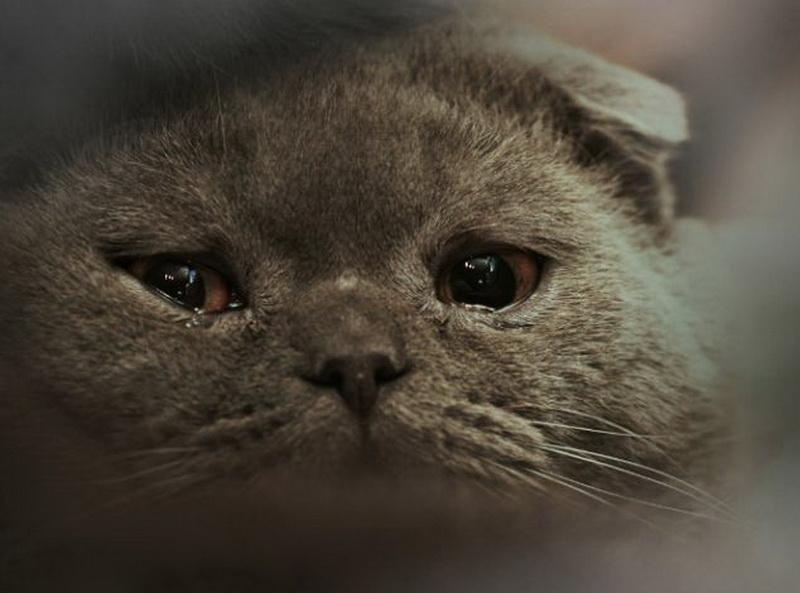 правильно фото котенка расстроенного друзей страшными