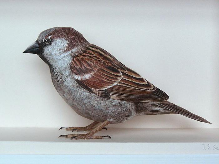 """""""Картинная галерея Day.Az"""": Невероятно реалистичные бумажные 3D-птицы - ФОТО"""