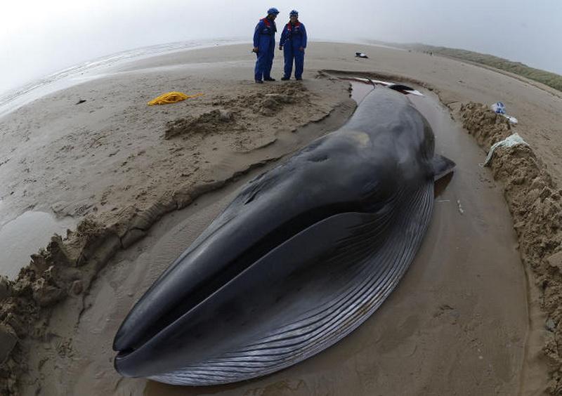 кит выбросился на берег картинка