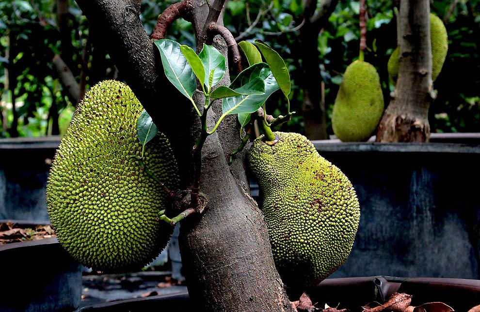 фрукты мира фото очаровательный