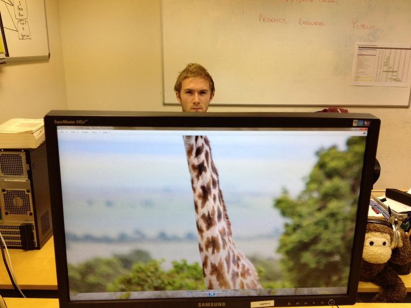 Офисный зоопарк: как скрасить тоскливые будни - ФОТОСЕССИЯ