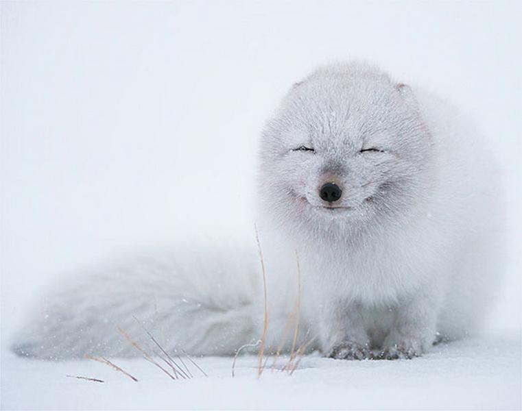 Счастливые животные, которые заставят любого улыбнуться - ФОТО