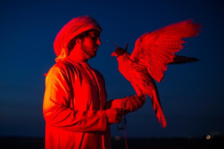 Хобби богачей: соколиная охота в Арабских Эмиратах - ФОТОСЕССИЯ