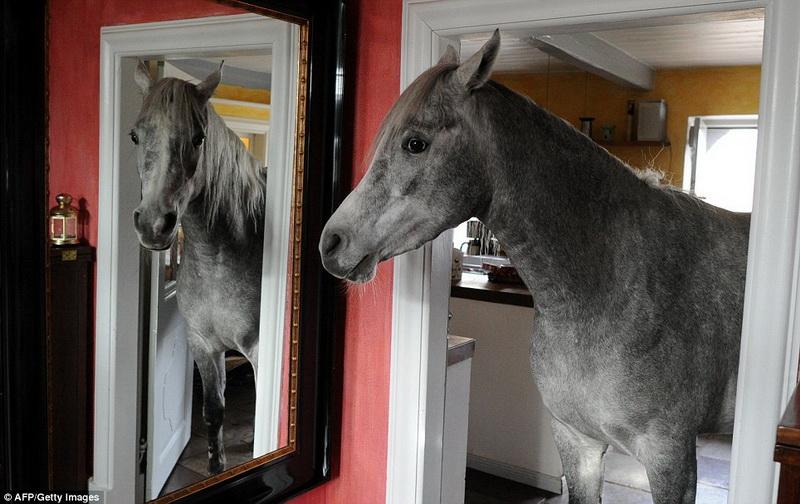 В Германии женщина живет в одном доме с лошадью - ФОТО