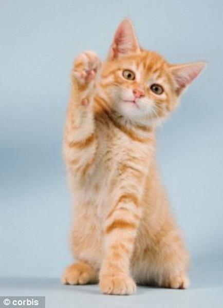 where to buy cheap cat litter box