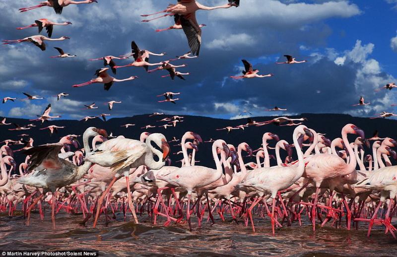 Озеро розовых фламинго, которое поражает своей красотой - ФОТО