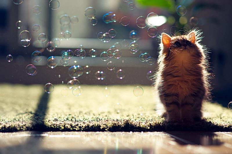 грустный кот дождь анимация загрузить