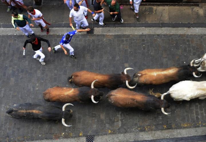 Опасное развлечение - в Испании начались забеги с быками - ФОТОСЕССИЯ