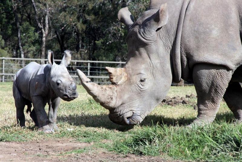 Видео, картинки из зоопарка