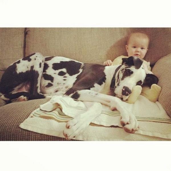Собаки, которые все еще считают себя щенками - ФОТО