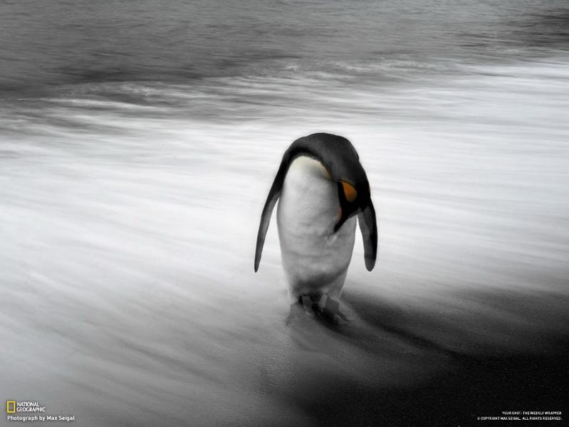 Лучшие фотографии недели от National Geographic - ФОТОСЕССИЯ