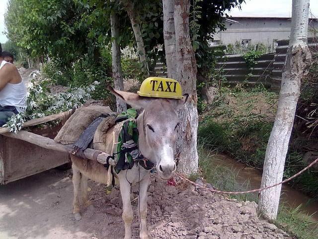 Таджикский картинка приколы