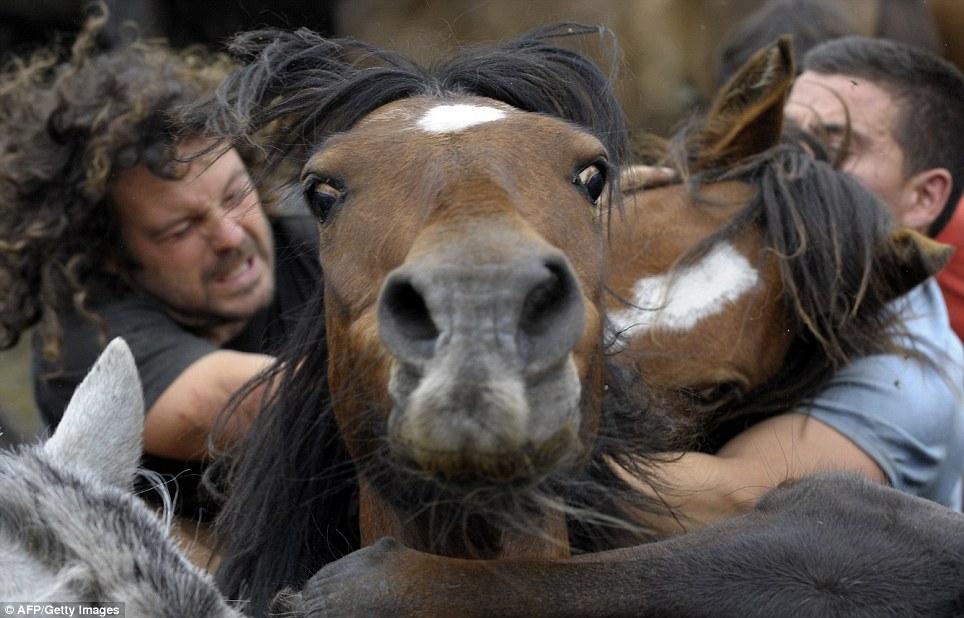 фото человека коня ночные клубы