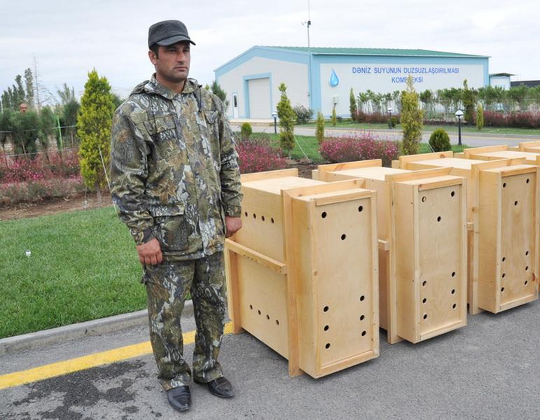 Кампания IDEA отправила из Азербайджана в Грузию 10 джейранов - ОБНОВЛЕНО - ФОТО