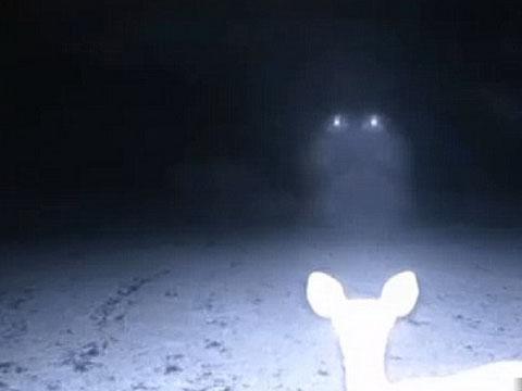 Скрытая камера в лесополосе