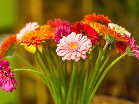 12 правил выбора цветов