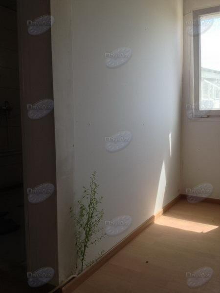 Что может вырасти в бакинской квартире - МОБИЛЬНЫЙ РЕПОРТЕР – ФОТО