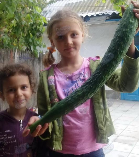 Такого овоща вы еще не видели - МОБИЛЬНЫЙ РЕПОРТЕР – ФОТО